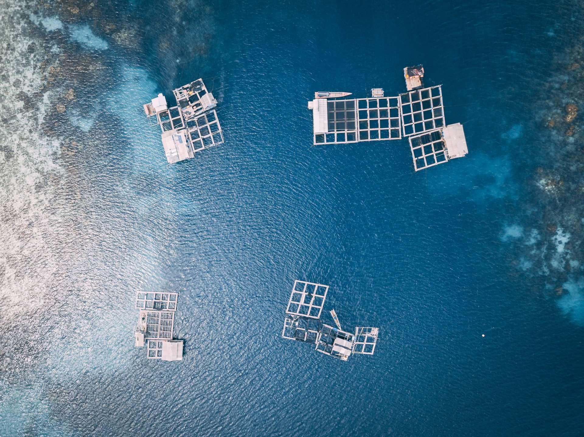 aquakultur nachhaltige fischerei