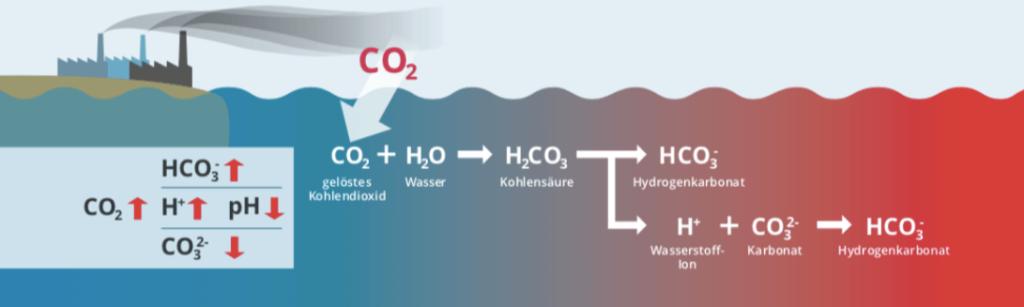 chemie-hinter-ozeanversauerung
