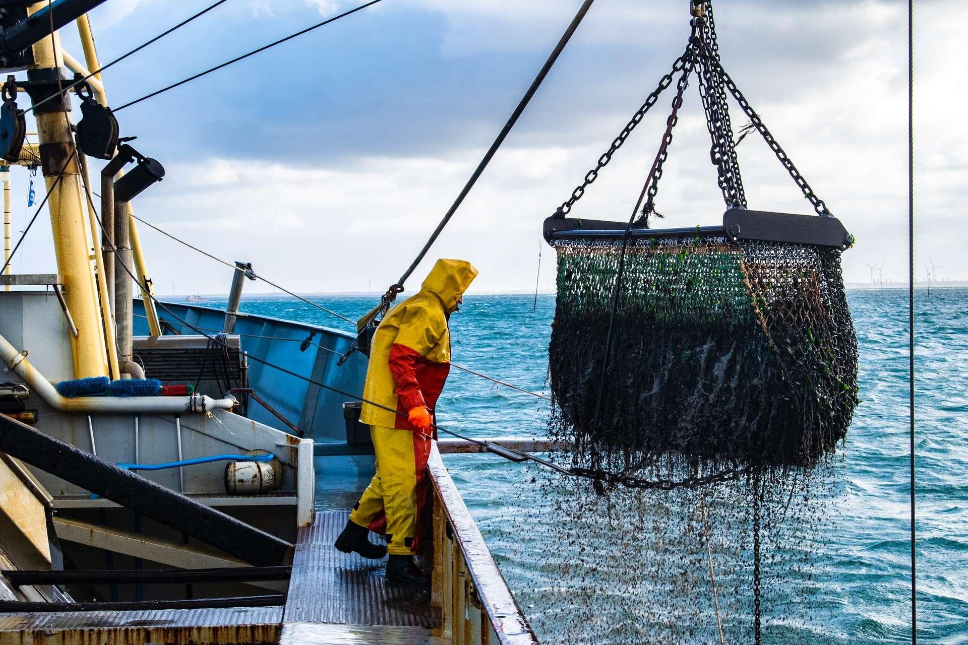sustainable wildfish fishery